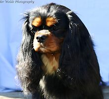 Clarelly Kyra  by doltoybreeds