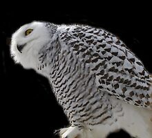 whoooo's there by Cheryl Dunning