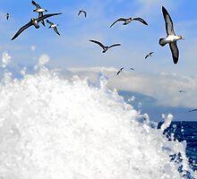 birds near Corvo, Azores (Atlantic sea) by Monica Di Carlo