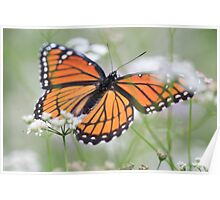 drying my wings Poster