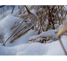 Ice jewell II  Photographic Print