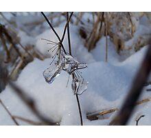 Ice jewell III Photographic Print
