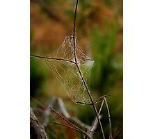 Natures Engineers Photographic Print