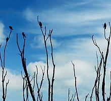 Songbird Silhouette by SRowe Art