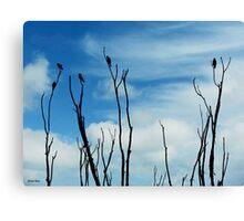Songbird Silhouette Canvas Print