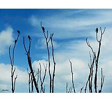 Songbird Silhouette Photographic Print