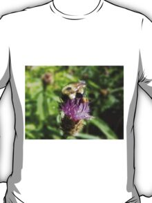 Bee On Thistle T-Shirt