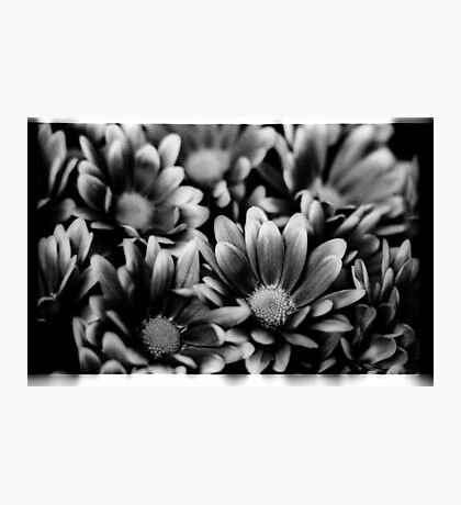 00391 Photographic Print
