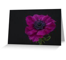 Single pink anemone Greeting Card