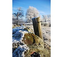 frozen  post Photographic Print