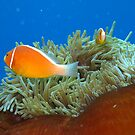 Great Barrier Reef by Marco Heising
