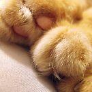 Paws by Tracy Wazny