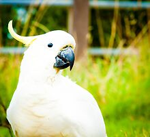 White parrot by Stanciuc