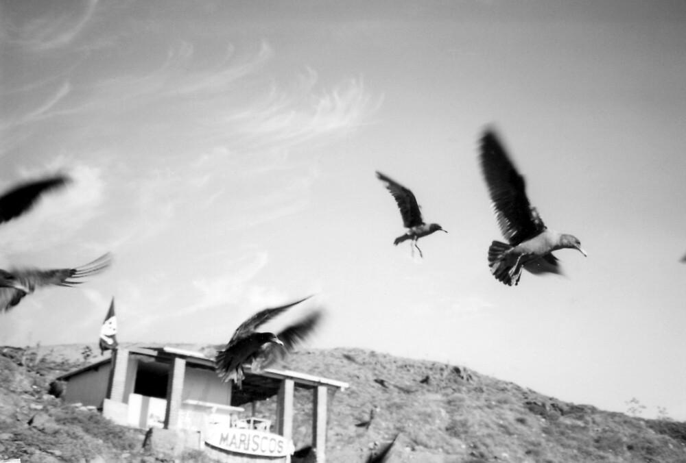 Wind Resistance by Steven Novak