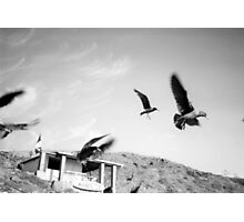 Wind Resistance Photographic Print
