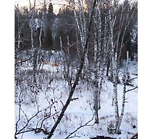 Wintry Aspens Photographic Print