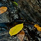 Leaves in Waterfall, Turtletown Creek West Falls by John O'Keefe-Odom