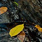 Leaves in Waterfall, Turtletown Creek West Falls by John O'Keefe-Odom