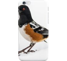 Spotted Towhee in snow iPhone Case/Skin