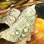 Turtletown Creek West Falls V Leaf Detail by John O'Keefe-Odom