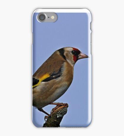 Sitting Pretty -- European Goldfinch - Carduelis carduelis iPhone Case/Skin