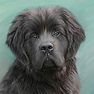 Dog portraits by Cazzie Cathcart