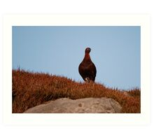 Famous Grouse Art Print
