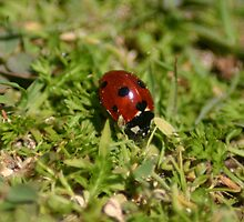 LadybugLove_Tall by K Y R S T I E  kyle Photography