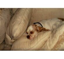 Mr. Sleeping Beauty Photographic Print