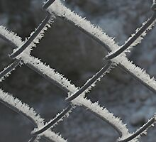 hoarfrost on chainlink by Stephen Thomas