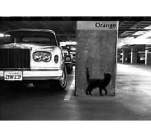 Cat & Rolls Photographic Print