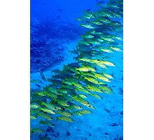 Hawaiian Fish Photographic Print