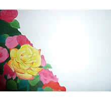 yellow rose with red tips Photographic Print