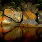Rock Reflections ,Tidal River ,Wilson's Prom. NP by Albert Sulzer