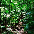 Rainforest  by JimMcleod