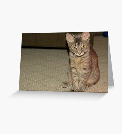 Short Haired Domestic House Cat Greeting Card
