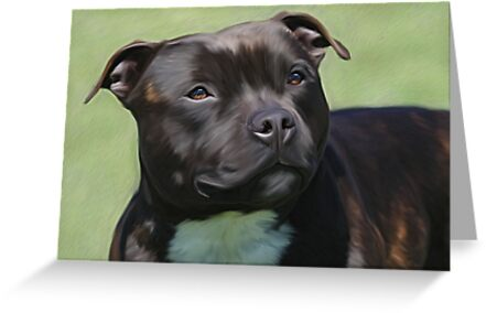 Diesel the Staffy by Cazzie Cathcart