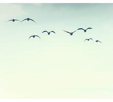 Wild ducks #1 by Ronny Falkenstein