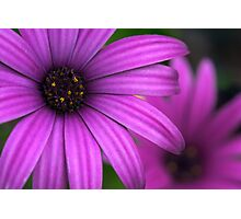 Flower in Warnambool Photographic Print