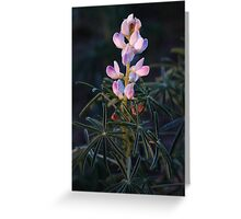 Lupin Flower Greeting Card