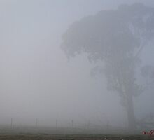 Morning Fog in Gungahlin (1) by Wolf Sverak