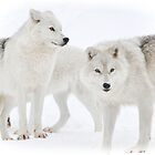 The way you look at me - Arctic Wolves by Poete100