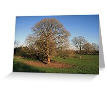 Trees in early winter Greeting Card