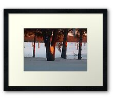 Sunset  Through The Trees Framed Print