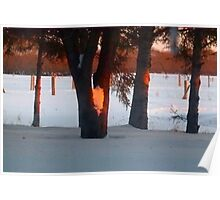 Sunset  Through The Trees Poster