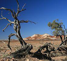 desert brushes by Gordon Slater