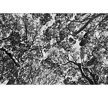 canopy Photographic Print