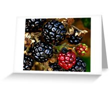 Berries in winter Greeting Card