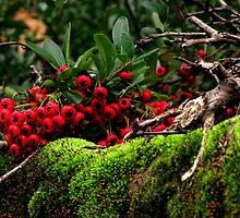 Berries and Moss by elenmirie