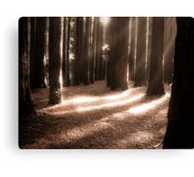 red woods 6 Canvas Print